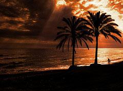 Palmer på Marbella