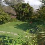 Stor tropisk trädgård