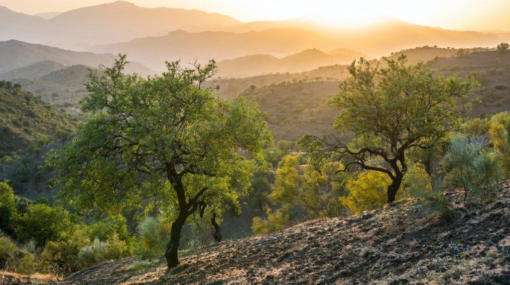 Landskap med träd och kullar Andalusien
